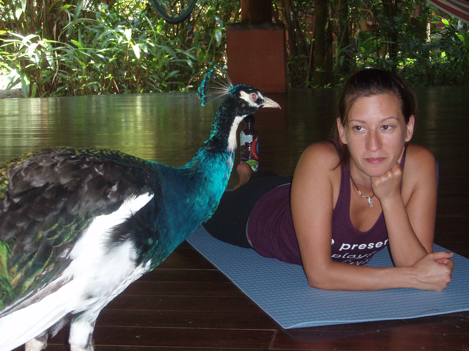A peacock looking to join me on my mat for some yoga in Costa Rica, 2012